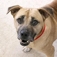 Adopt A Pet :: April AKA Happy - Loxahatchee, FL