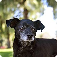 Adopt A Pet :: Sosa - Los Angeles, CA