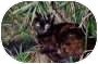 Domestic Shorthair Cat for adoption in Burlington, Washington - Barn Cats