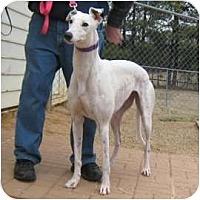 Adopt A Pet :: Lana - Oak Ridge, NC