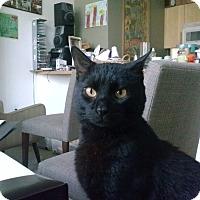 Adopt A Pet :: Jose - Chicago, IL