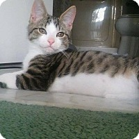 Adopt A Pet :: Zander - Olmsted Falls, OH