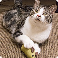 Adopt A Pet :: Jackson Galaxy - Chicago, IL