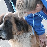Adopt A Pet :: Roxy - Bellflower, CA