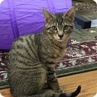 Adopt A Pet :: Deeno - McHenry, IL