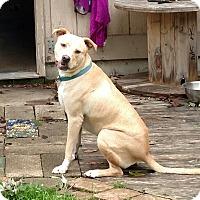 Adopt A Pet :: Griffin - LANSING, MI