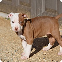 Adopt A Pet :: Dancer - Mission Viejo, CA