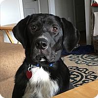 Adopt A Pet :: BB - Nashville, TN