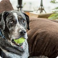 Adopt A Pet :: Earl - Northville, MI