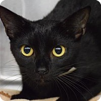 Adopt A Pet :: Sabrina - Bradenton, FL