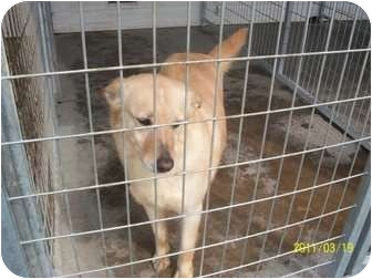 Husky Mix Dog for adoption in Farmingtoon, Missouri - Molly