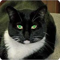 Adopt A Pet :: Oprah - Secaucus, NJ