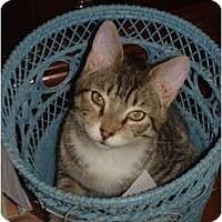 Adopt A Pet :: Pepper - Chesapeake, VA