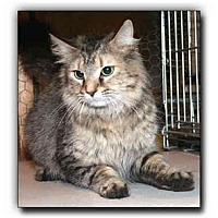 Adopt A Pet :: Cleo - Howell, MI