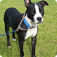 Adopt A Pet :: DANNY - North Augusta, SC