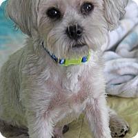 Adopt A Pet :: Gator - Yuba City, CA
