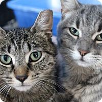 Adopt A Pet :: Zamata - Chicago, IL