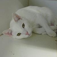 Adopt A Pet :: Pinky - Roseville, CA