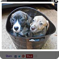 Adopt A Pet :: Libby - Garwood, NJ
