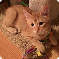 Adopt A Pet :: Momo - North Highlands, CA