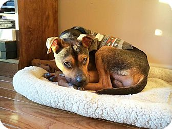 Shepherd (Unknown Type) Mix Dog for adoption in Franklinville, New Jersey - Brayden