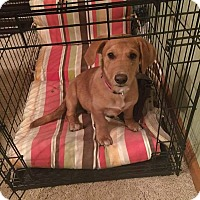 Adopt A Pet :: Nugget in CT - Manchester, CT