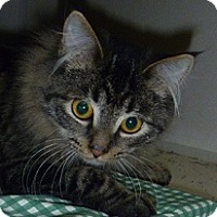 Adopt A Pet :: Speedy - Hamburg, NY