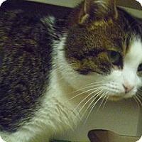 Adopt A Pet :: Misty - Hamburg, NY