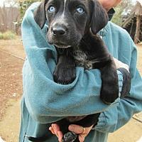 Adopt A Pet :: MAX - Williston Park, NY
