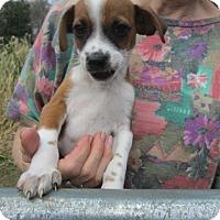 Adopt A Pet :: STUART - Rutherfordton, NC