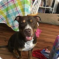 Adopt A Pet :: Sadie - Summerville, SC