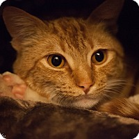 Adopt A Pet :: Sonny - Eureka, CA