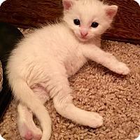 Adopt A Pet :: Larry - Edmond, OK