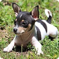 Adopt A Pet :: Hopi~adopted! - Glastonbury, CT