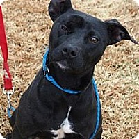 Adopt A Pet :: Wanda Christina - North Chittenden, VT