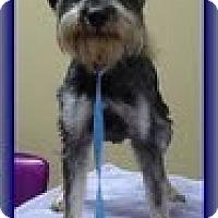 Adopt A Pet :: Pip - Staunton, VA