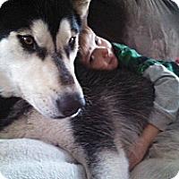 Adopt A Pet :: Tala - Alliance, NE