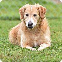 Adopt A Pet :: Wilma and Fred - New Canaan, CT