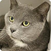 Adopt A Pet :: Shade - Herndon, VA