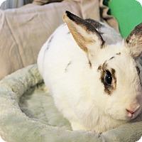 Adopt A Pet :: Idaho - Hillside, NJ