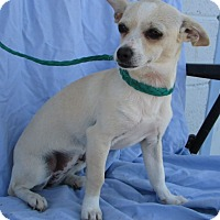 Adopt A Pet :: Teaky - grants pass, OR