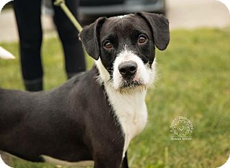 Terrier (Unknown Type, Medium) Mix Dog for adoption in Zanesville, Ohio - Diesel - ADOPTED!