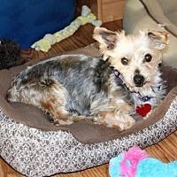 Adopt A Pet :: Winnie - Alamosa, CO