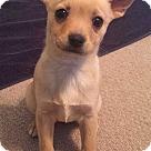 Adopt A Pet :: Bailey O