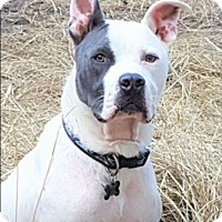 Adopt A Pet :: DEUCE - Nashville, TN
