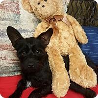 Terrier (Unknown Type, Medium) Mix Dog for adoption in Spartanburg, South Carolina - DC
