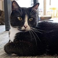 Adopt A Pet :: Alina - St. Louis, MO