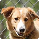 Adopt A Pet :: Katie (Needs Foster/Has Application)