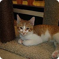 Adopt A Pet :: Popcorn & Pretzel - Chesapeake, VA