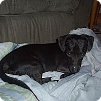Adopt A Pet :: Carl - Hancock, MI